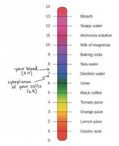the_ph_scale